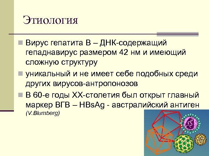 Этиология n Вирус гепатита В – ДНК содержащий гепаднавирус размером 42 нм и имеющий