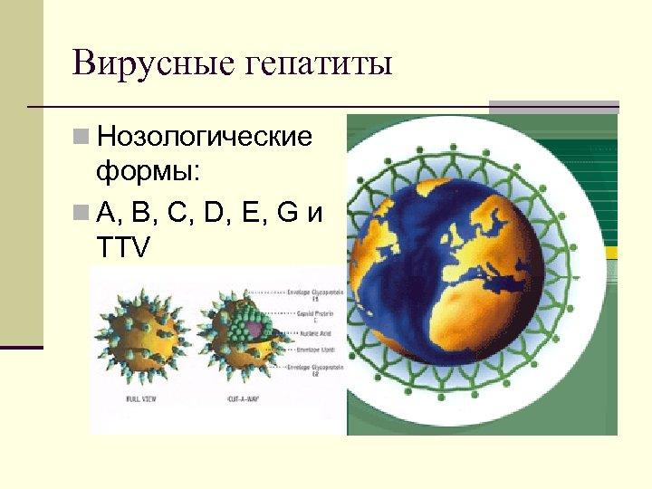 Вирусные гепатиты n Нозологические формы: n А, В, С, D, Е, G и TTV