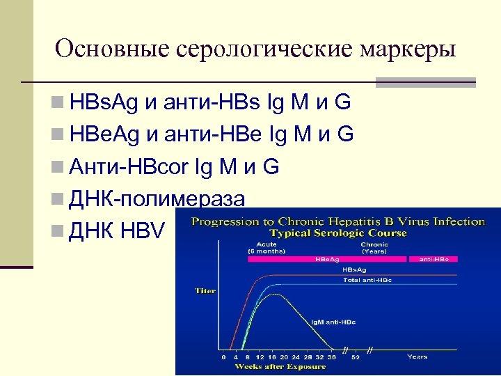 Основные серологические маркеры n HBs. Ag и анти HBs Ig M и G n