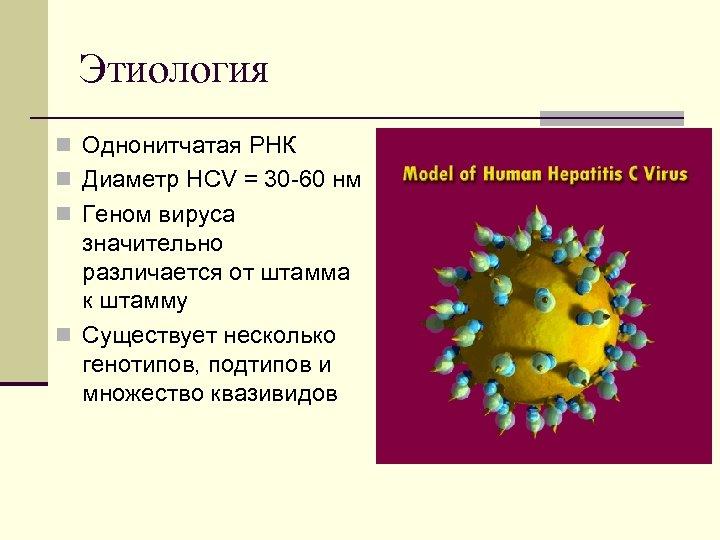Этиология n Однонитчатая РНК n Диаметр HCV = 30 60 нм n Геном вируса