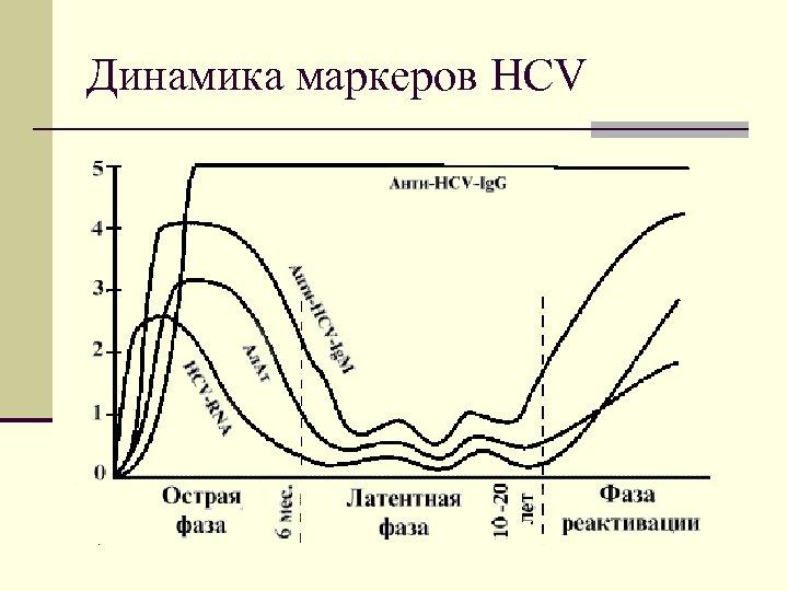 Динамика маркеров HCV