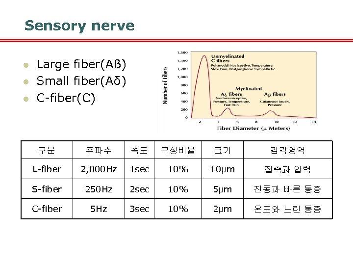 Sensory nerve l l l Large fiber(Aß) Small fiber(Aδ) C-fiber(C) 구분 주파수 속도 구성비율