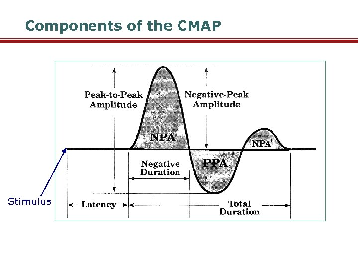 Components of the CMAP Stimulus