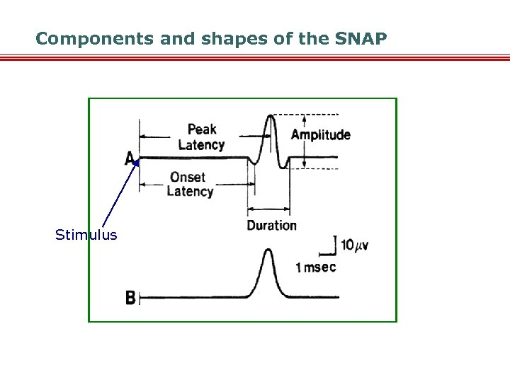 Components and shapes of the SNAP Stimulus