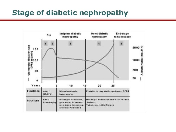 Stage of diabetic nephropathy