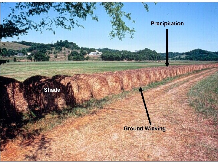 Precipitation Hay bales should be covered to reduce the nutrients leaching back into the