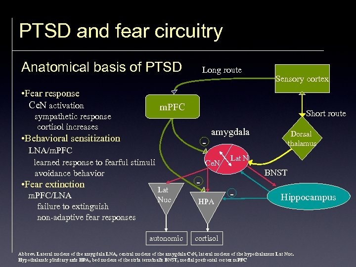 PTSD and fear circuitry Anatomical basis of PTSD • Fear response Ce. N activation