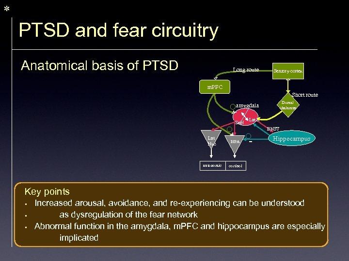* PTSD and fear circuitry Anatomical basis of PTSD Long route Sensory cortex m.