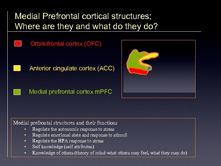 Medial Prefrontal cortical structures; Where are they and what do they do? Orbitofrontal cortex