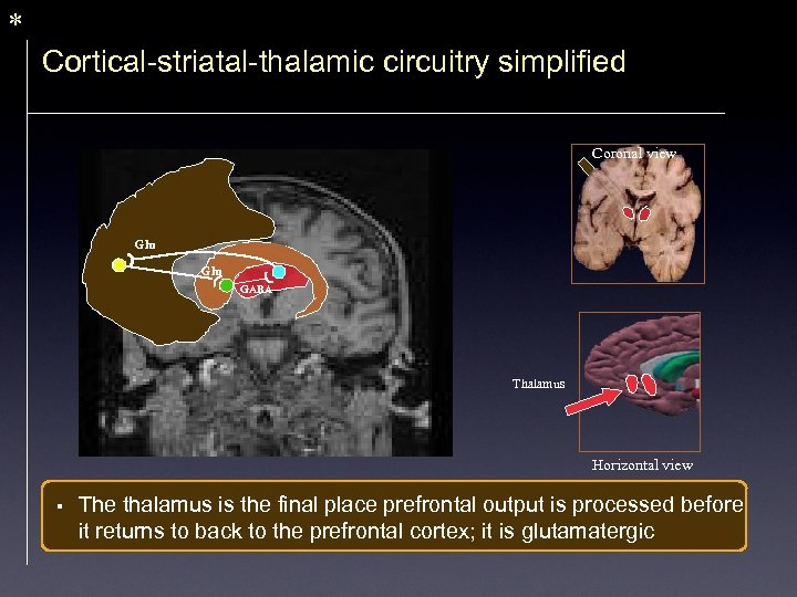 * Cortical-striatal-thalamic circuitry simplified Coronal view Glu GABA Thalamus Horizontal view § The thalamus
