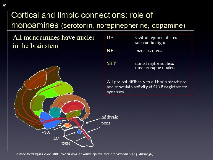 * Cortical and limbic connections: role of monoamines (serotonin, norepinepherine, dopamine) All monoamines have