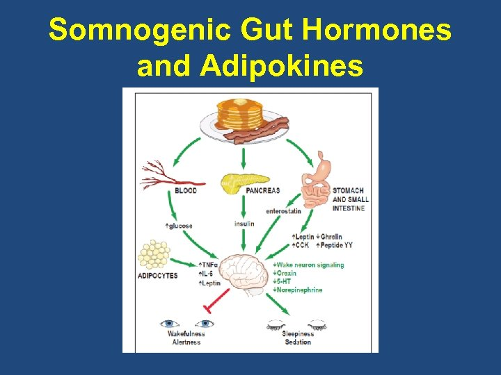 Somnogenic Gut Hormones and Adipokines