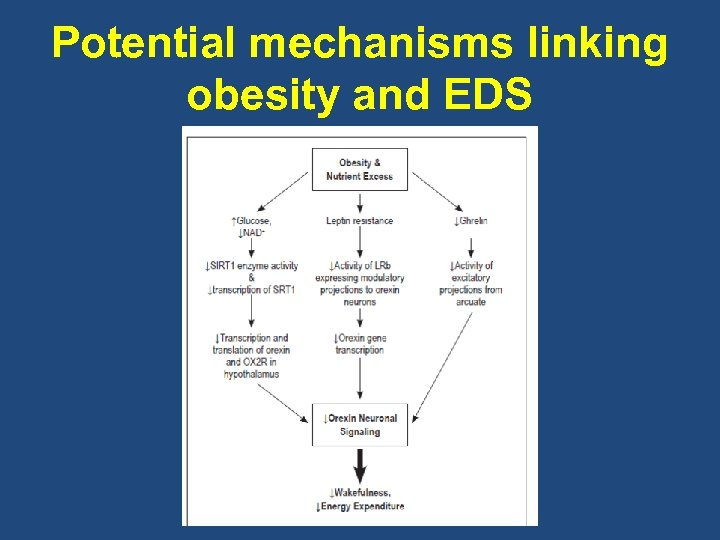 Potential mechanisms linking obesity and EDS