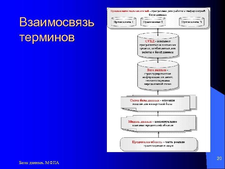 Взаимосвязь терминов Базы данных. МФПА 20