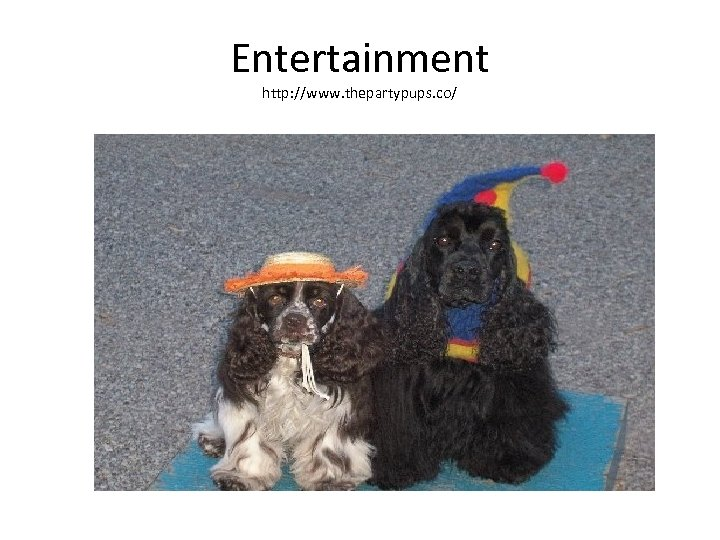 Entertainment http: //www. thepartypups. co/