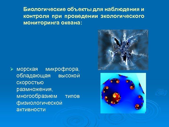 Биологические объекты для наблюдения и контроля при проведении экологического мониторинга океана: Ø морская микрофлора,