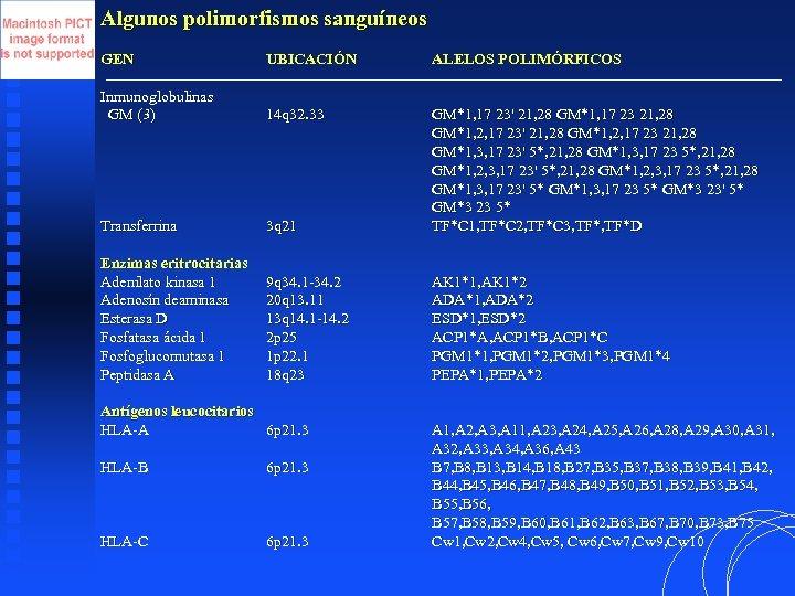 Algunos polimorfismos sanguíneos GEN UBICACIÓN ALELOS POLIMÓRFICOS Inmunoglobulinas GM (3) 14 q 32. 33