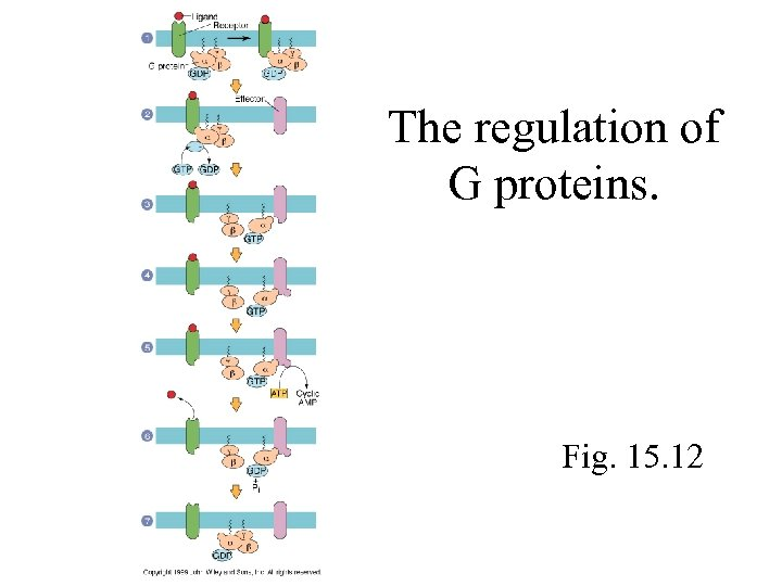 The regulation of G proteins. Fig. 15. 12
