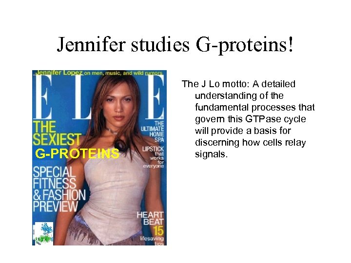 Jennifer studies G-proteins! G-PROTEINS The J Lo motto: A detailed understanding of the fundamental