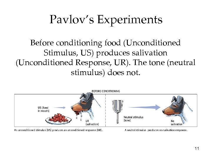 Pavlov's Experiments Before conditioning food (Unconditioned Stimulus, US) produces salivation (Unconditioned Response, UR). The