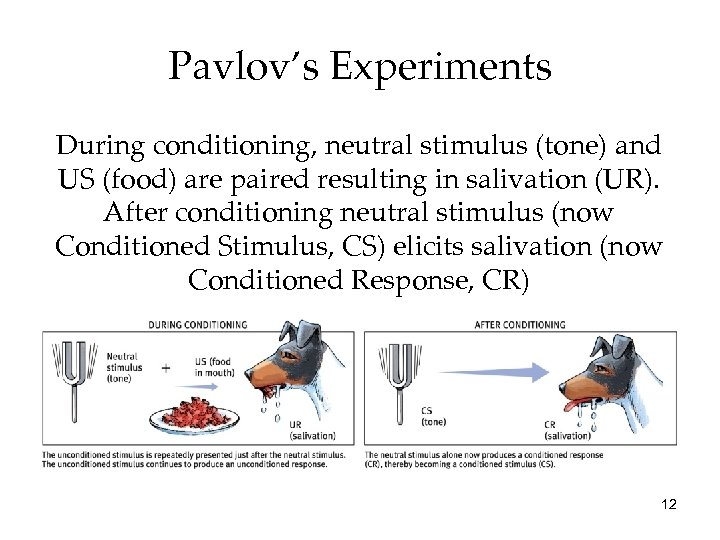 Pavlov's Experiments During conditioning, neutral stimulus (tone) and US (food) are paired resulting in