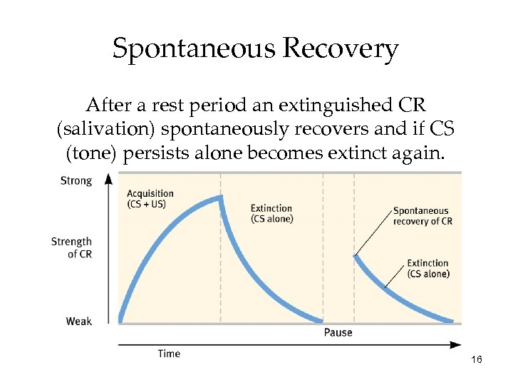 Spontaneous Recovery After a rest period an extinguished CR (salivation) spontaneously recovers and if