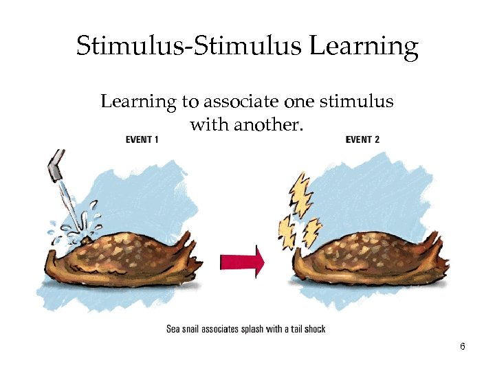 Stimulus-Stimulus Learning to associate one stimulus with another. 6