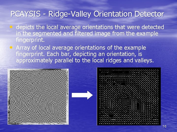PCAYSIS - Ridge-Valley Orientation Detector • depicts the local average orientations that were detected