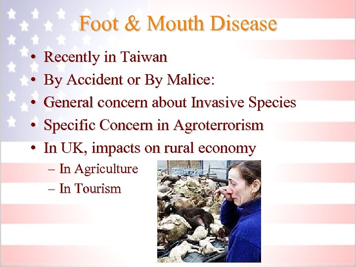Foot & Mouth Disease • • • Recently in Taiwan By Accident or By