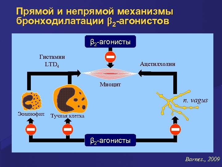 Прямой и непрямой механизмы бронходилатации β 2 -агонистов β 2 -агонисты Гистамин LTD 4
