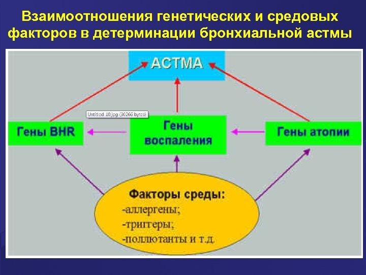 Взаимоотношения генетических и средовых факторов в детерминации бронхиальной астмы