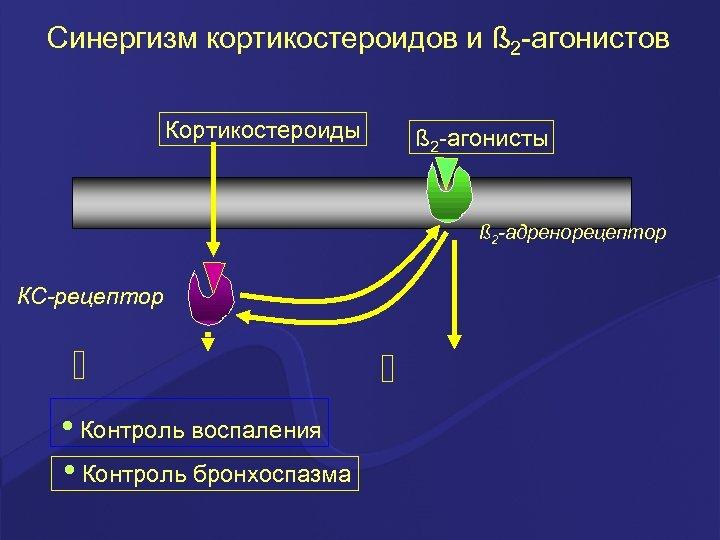Синергизм кортикостероидов и ß 2 -агонистов Кортикостероиды ß 2 -агонисты ß 2 -адренорецептор КС-рецептор