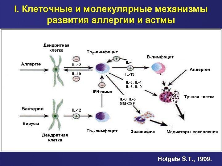 I. Клеточные и молекулярные механизмы развития аллергии и астмы Holgate S. T. , 1999.