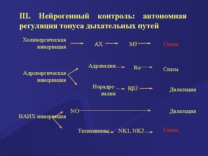 III. Нейрогенный контроль: автономная регуляция тонуса дыхательных путей Холинергическая иннервация АХ Адреналин Адренергическая иннервация