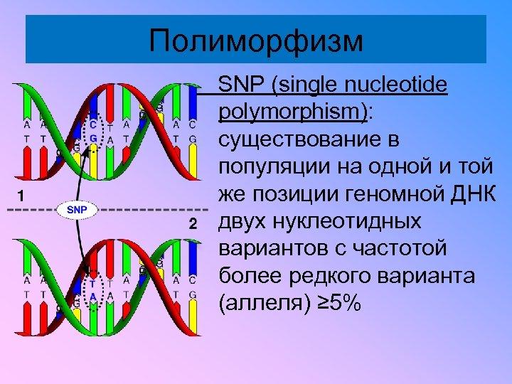 Полиморфизм SNP (single nucleotide polymorphism): существование в популяции на одной и той же позиции