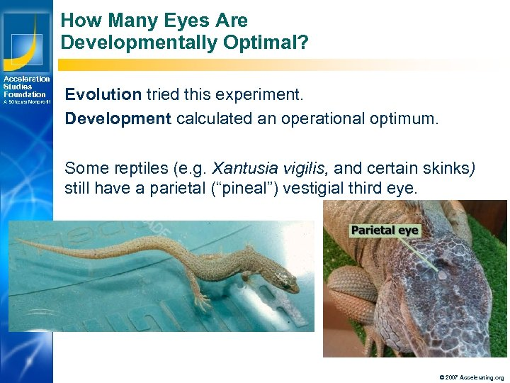 How Many Eyes Are Developmentally Optimal? Acceleration Studies Foundation A 501(c)(3) Nonprofit Evolution tried