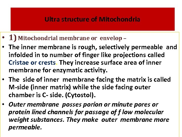 Ultra structure of Mitochondria • 1) Mitochondrial membrane or envelop – • The inner