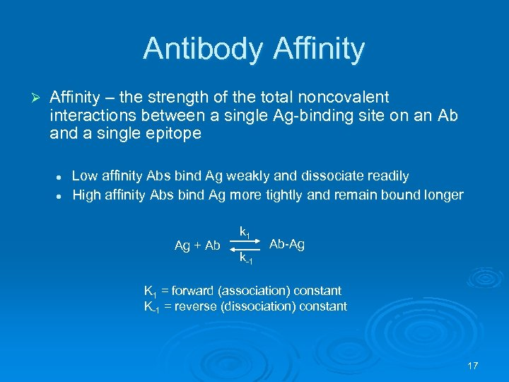 Antibody Affinity Ø Affinity – the strength of the total noncovalent interactions between a