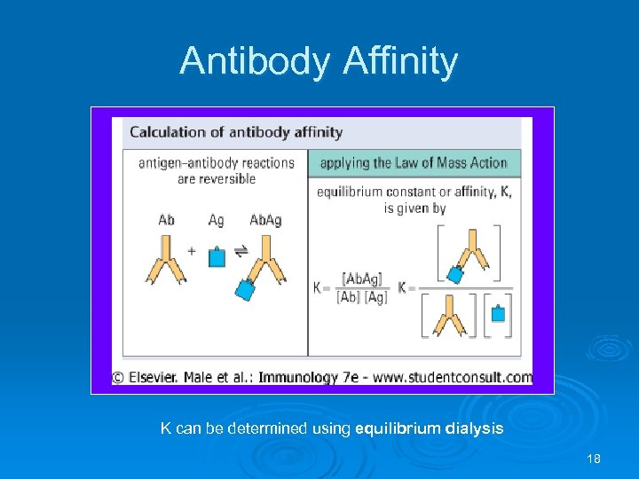 Antibody Affinity K can be determined using equilibrium dialysis 18