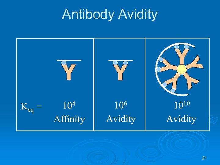 Antibody Avidity Keq = 104 Affinity 106 Avidity 1010 Avidity 21