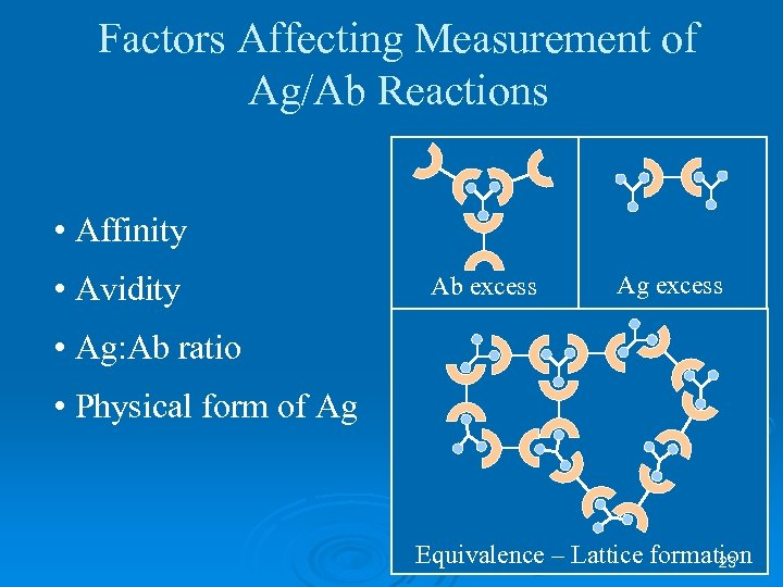 Factors Affecting Measurement of Ag/Ab Reactions • Affinity • Avidity Ab excess Ag excess