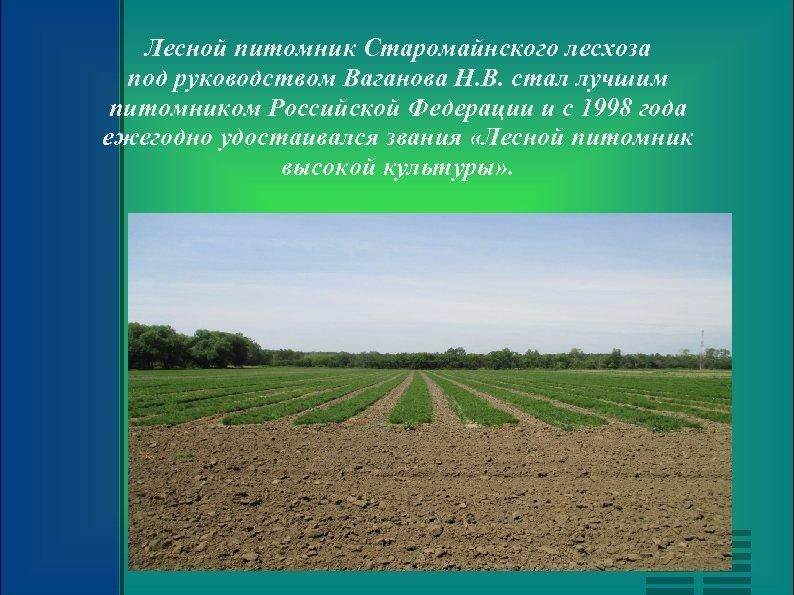 Лесной питомник Старомайнского лесхоза под руководством Ваганова Н. В. стал лучшим питомником Российской Федерации