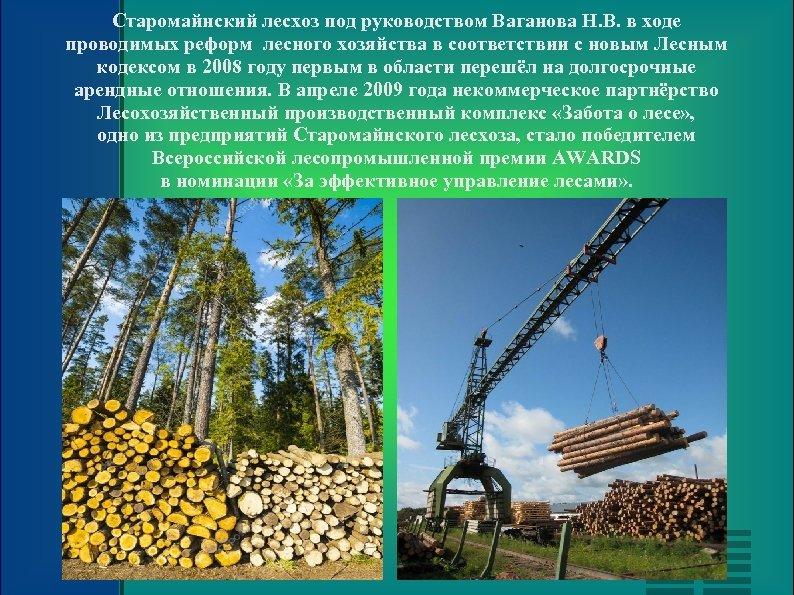 Старомайнский лесхоз под руководством Ваганова Н. В. в ходе проводимых реформ лесного хозяйства в