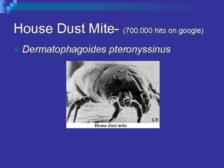House Dust Mite- (700, 000 hits on google) n Dermatophagoides pteronyssinus