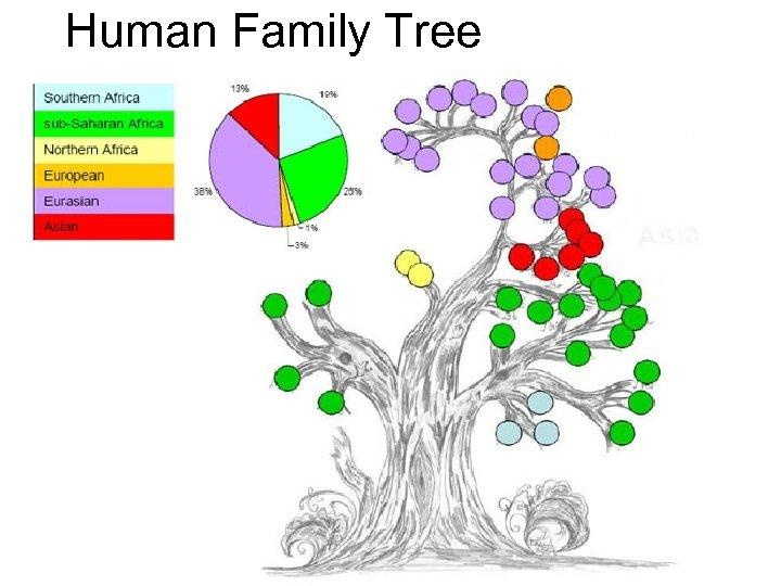 Human Family Tree