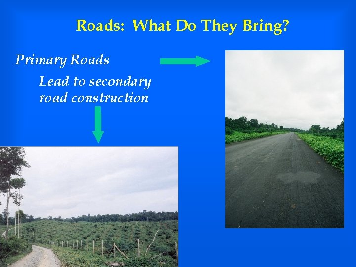 Roads: What Do They Bring? Primary Roads Lead to secondary road construction
