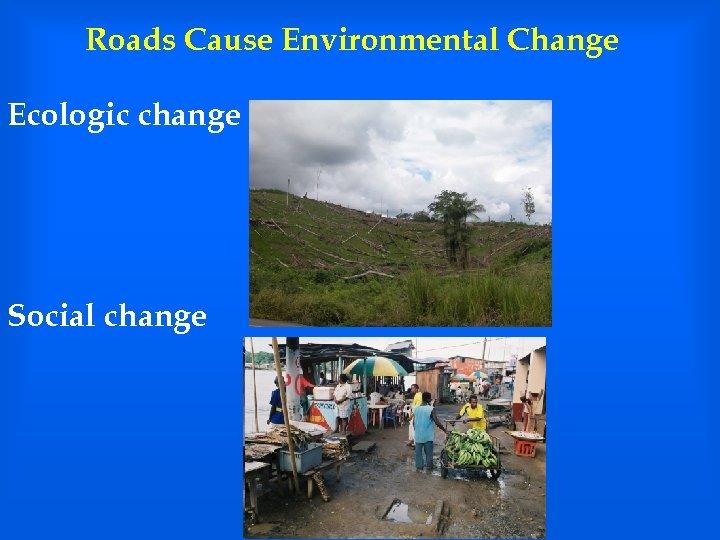 Roads Cause Environmental Change Ecologic change Social change