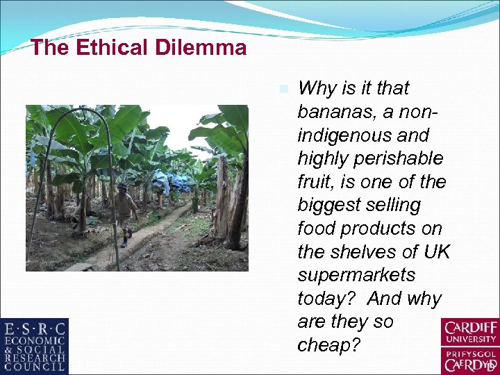 The Ethical Dilemma n Why is it that bananas, a nonindigenous and highly perishable