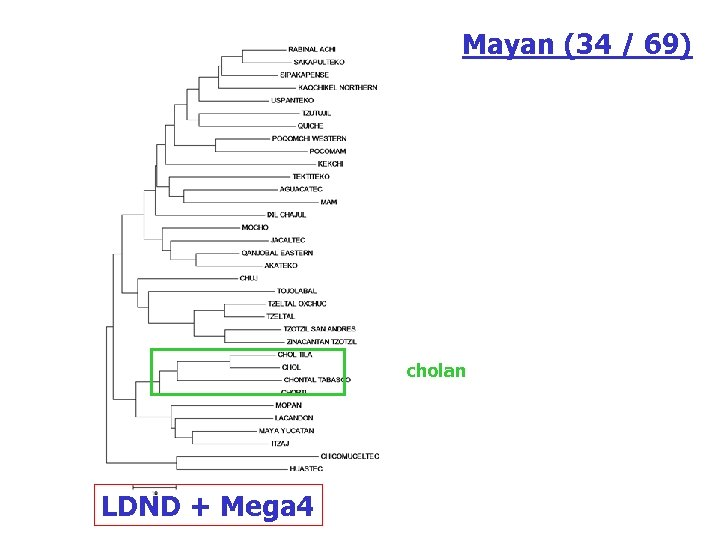 Mayan (34 / 69) cholan LDND + Mega 4