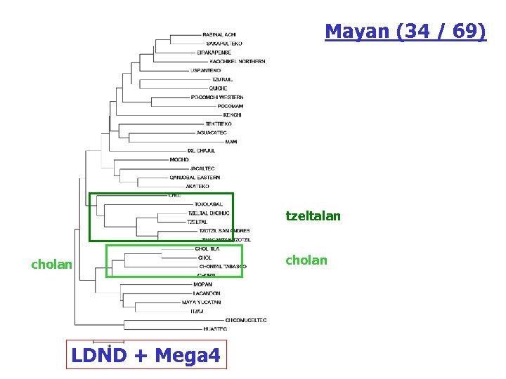 Mayan (34 / 69) tzeltalan cholan LDND + Mega 4 cholan